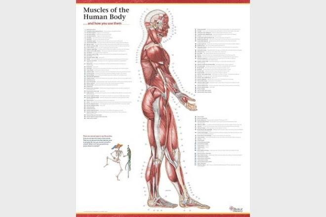 Trail Guide to the Body: How to Locate Muscles, Bones
